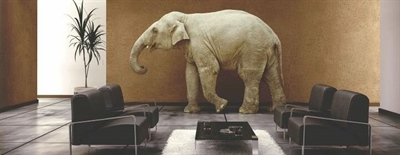 Un éléphant dans le salon